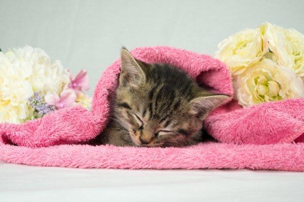 ペットは供養する時代に、死んだ時にすべき遺体のケア方法